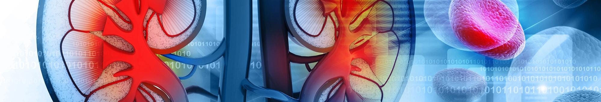 Nephrology - Specialized - Treatment
