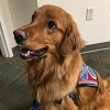 Max the Therapy Dog